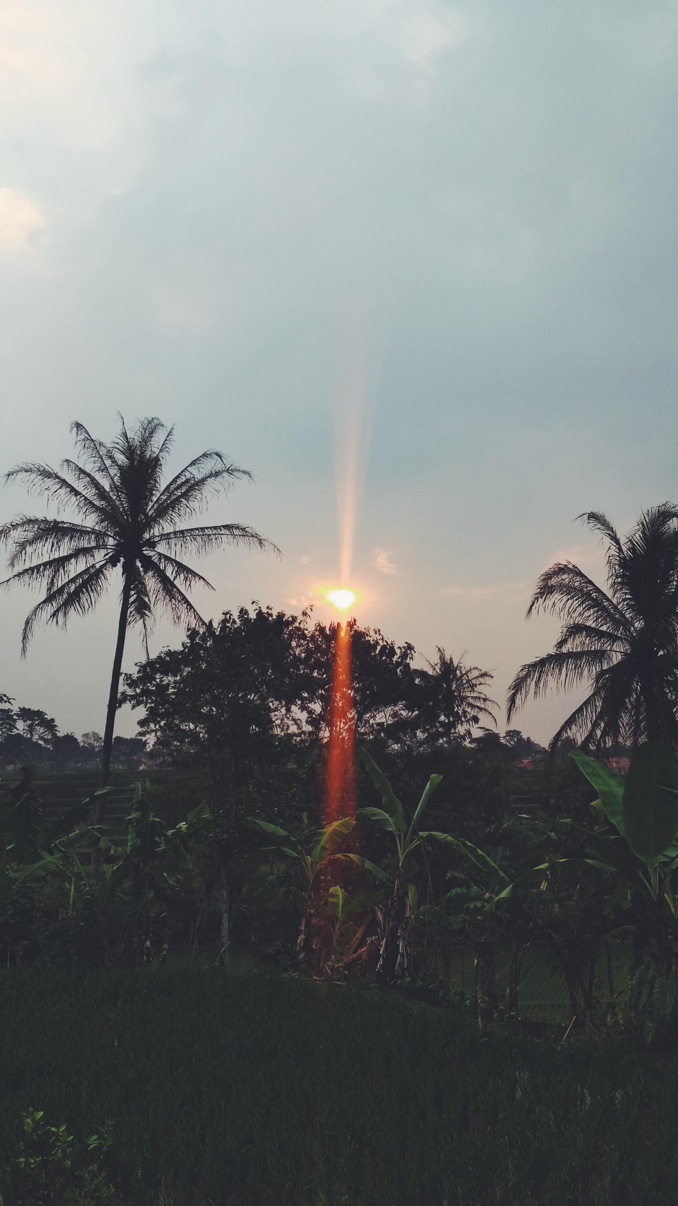 Sunrise ~ 2019/06/29