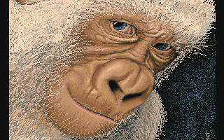 00011_orangutan_resized.jpg