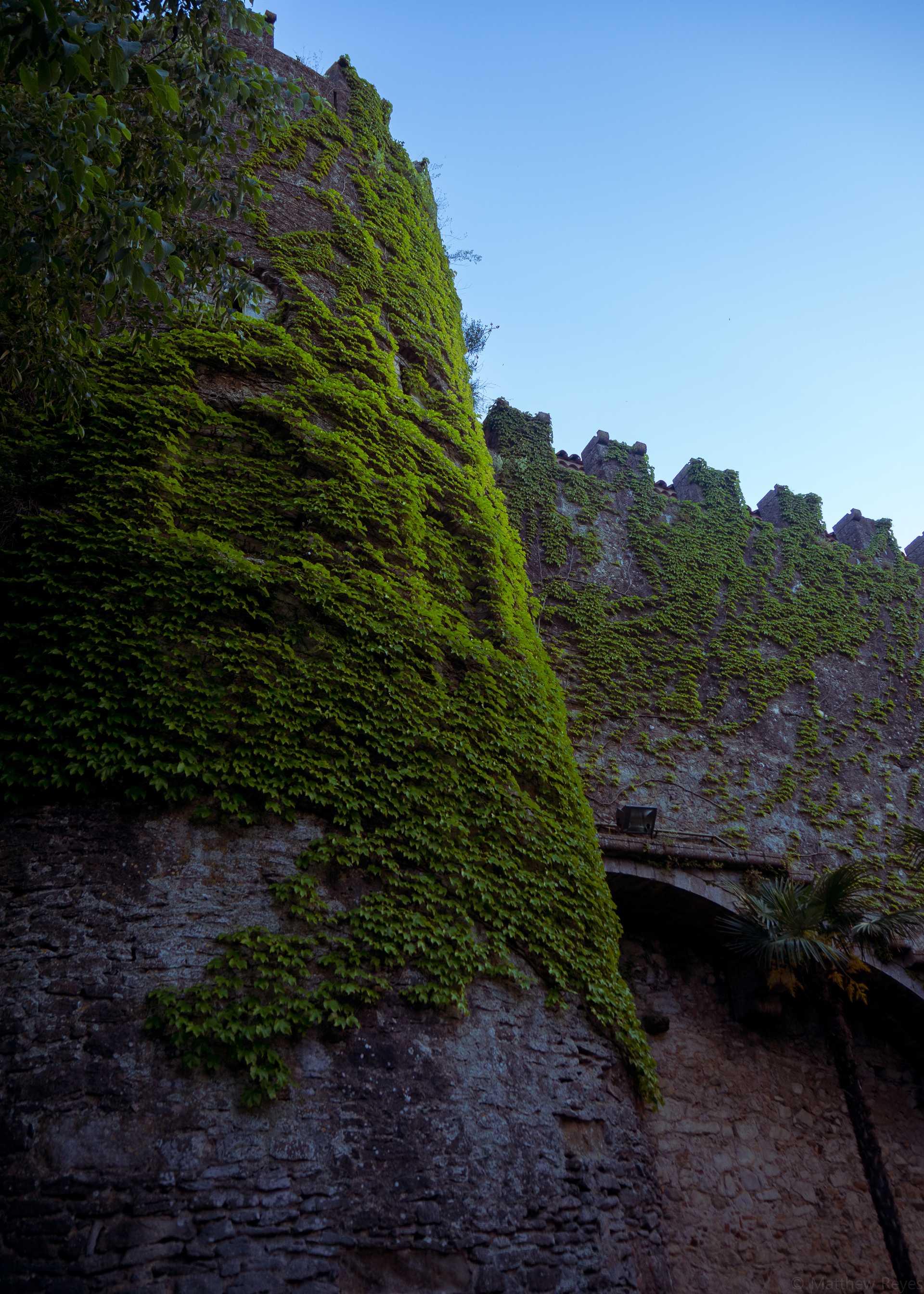 Castle_Growth.jpg