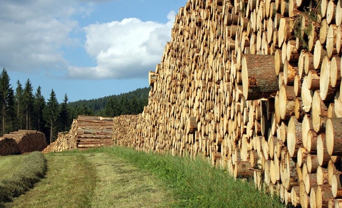 taglio e raccolta del legname