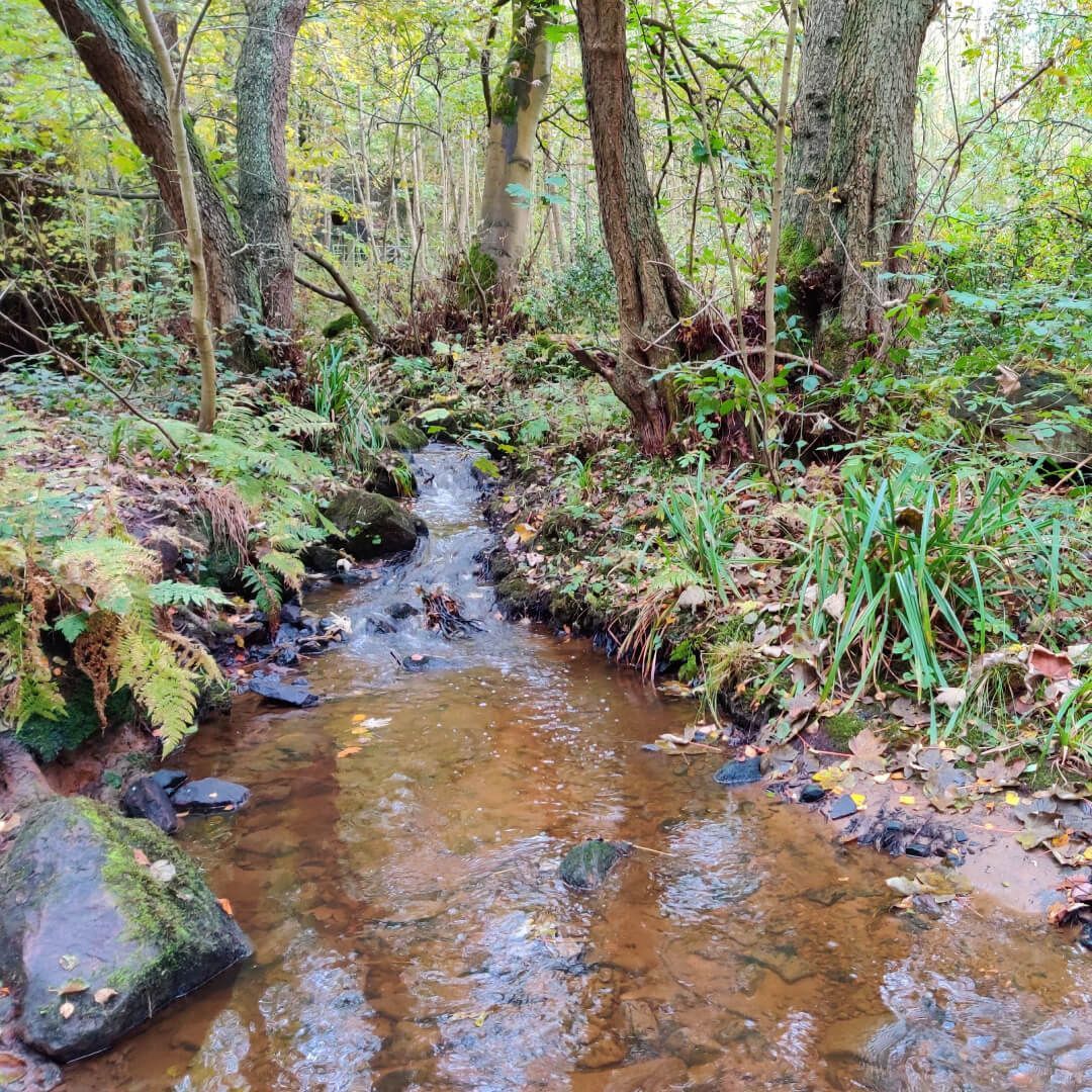 Adel Wood Stream
