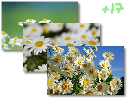 Daisy theme pack