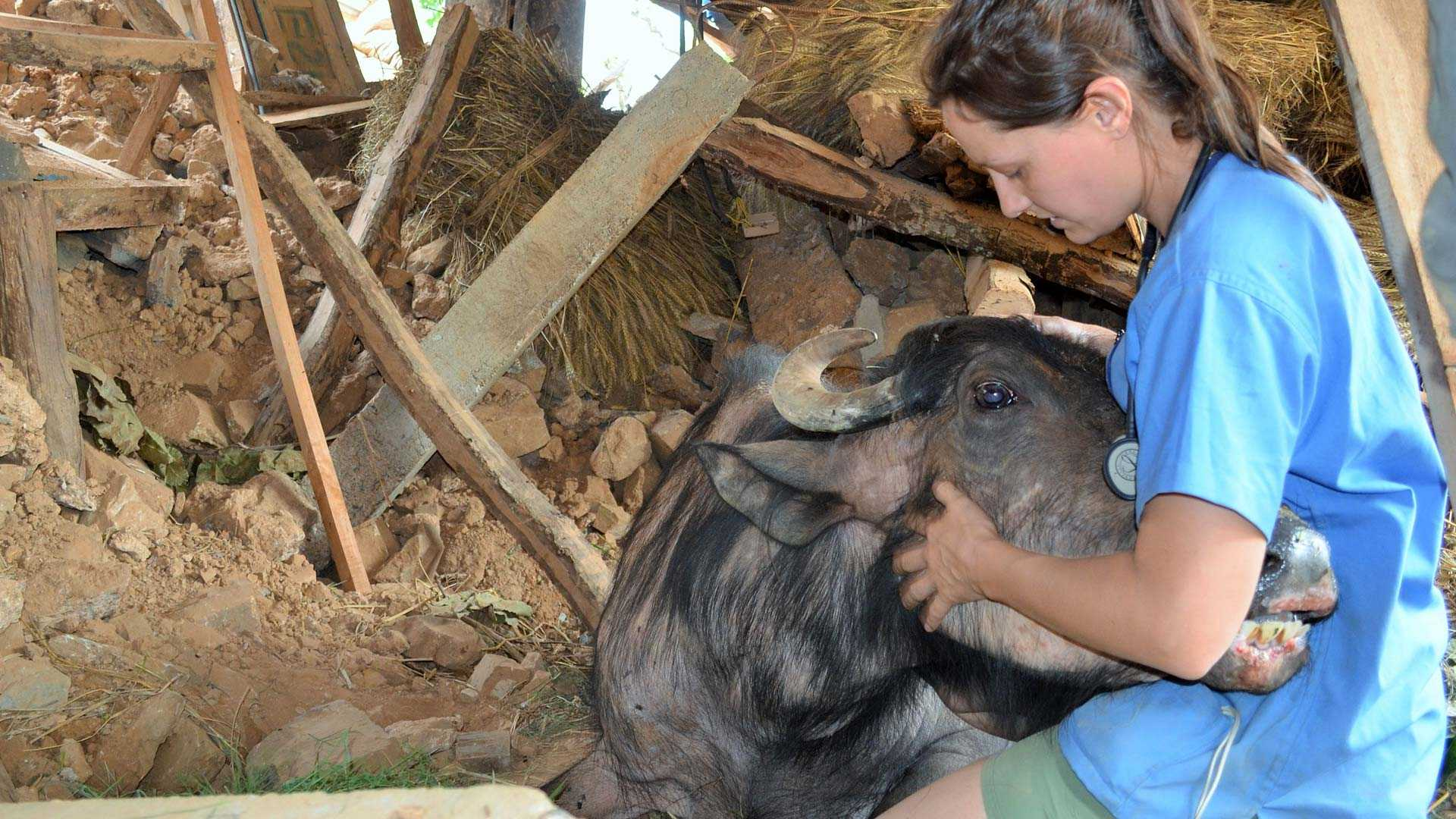Get assistance from the Worldwide Veterinary Service