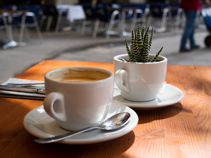 Cup of coffee with succulent
