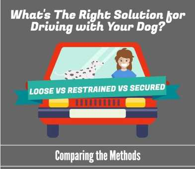 What's the Right Dog Travel Solution?