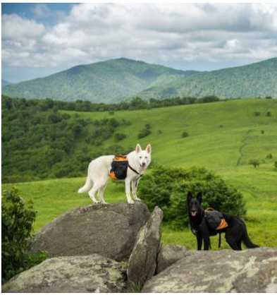 Spring Travel Hot Spots for You and Your Pup