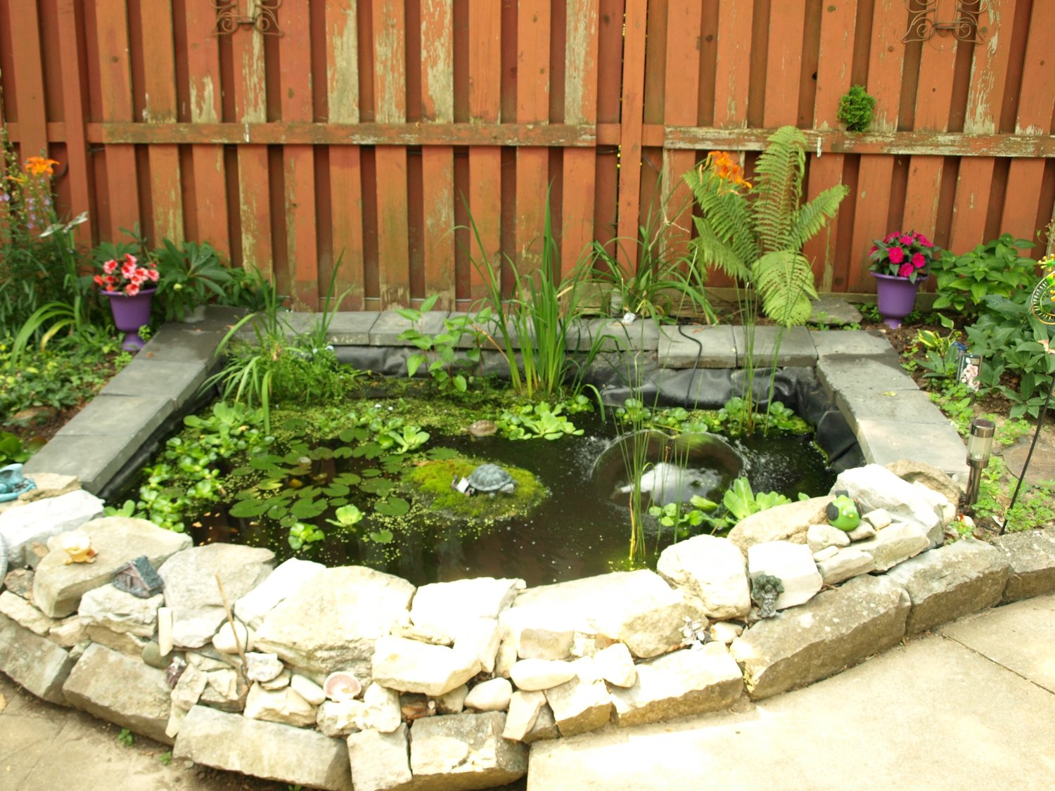 Our pond in all its glory