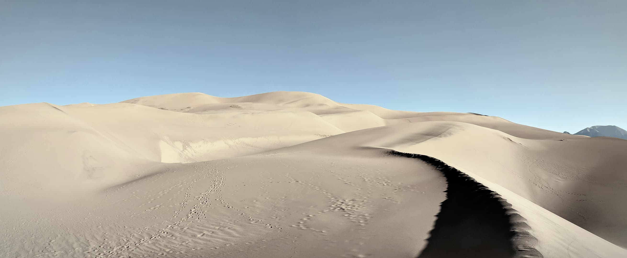 A panorama over the dunes at Great Sand Dunes National Park. Nothing but undulating sand and clear blue skies can be seen.