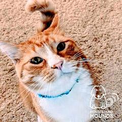 cat-06-hbh