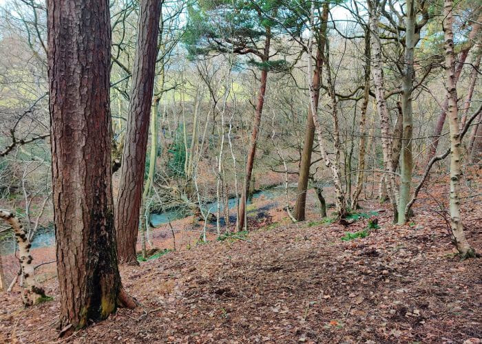 Scotland Wood looking down to Meanwood Beck