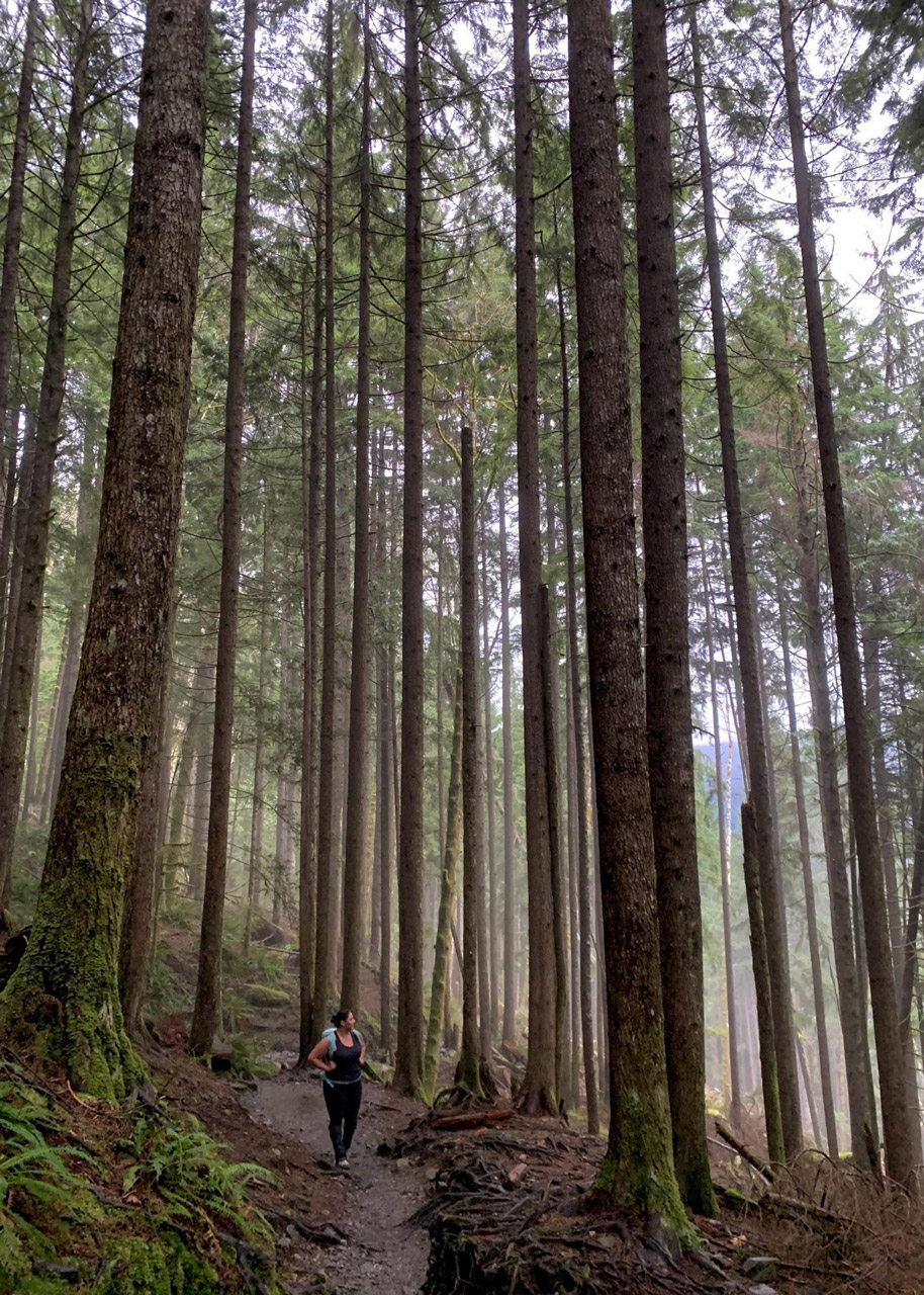 A long shot of Joanna Genovese hiking through a dense forest of giant redwoods and pine trees.