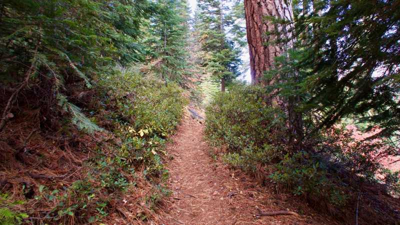 Smooth trail on a long climb
