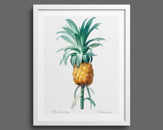 Pineapple (Bromelia Ananas) by Pierre-Joseph Redouté