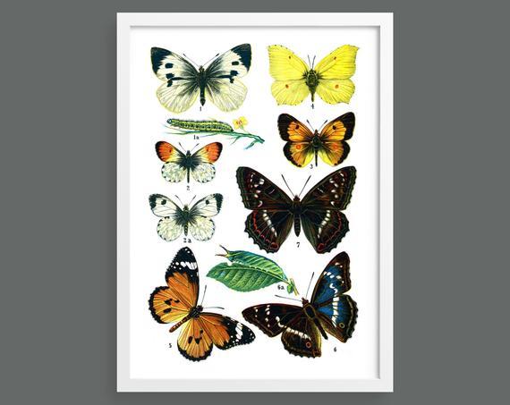 Butterflies and Moths – Plate 2