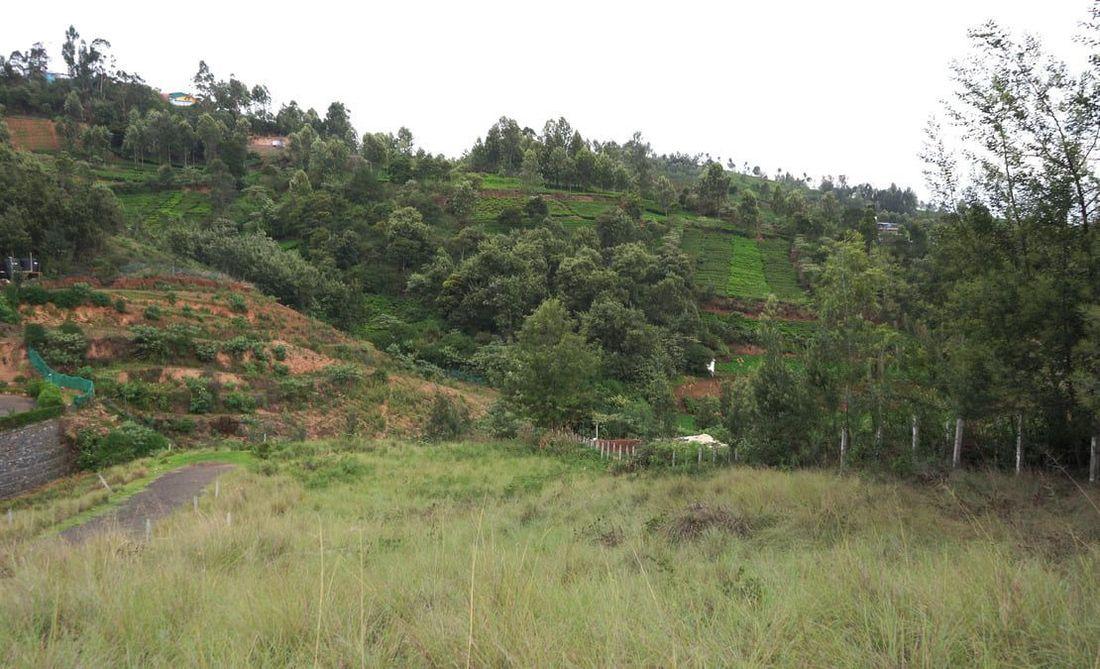 A beautiful patch along a tea estate boundary