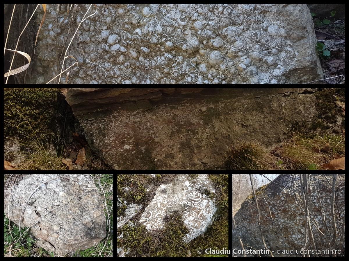 Scoici fosilizate la Mânzălești