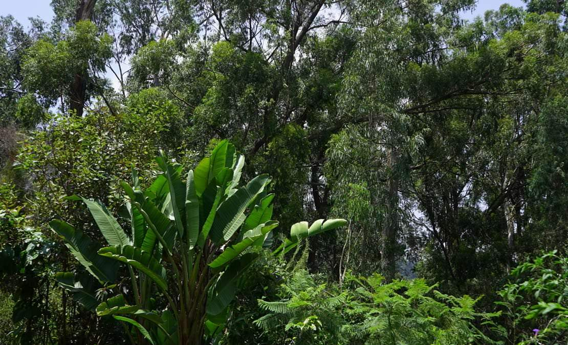 A view of the Sims park forest from Kenilworth Bungalow