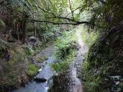 Track along stream