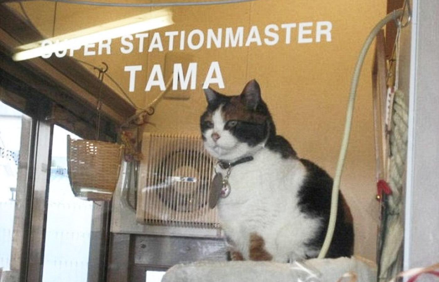 Кошка Тама заработой. Фото изсоцсетей