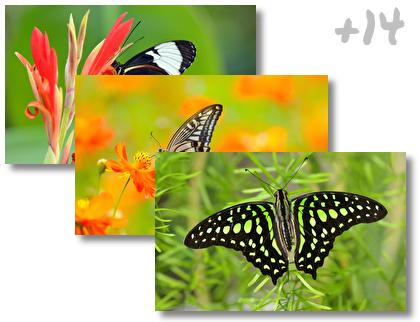 Butterfly theme pack