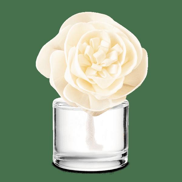 Very Snowy Spruce - Buttercup Belle Fragrance Flower