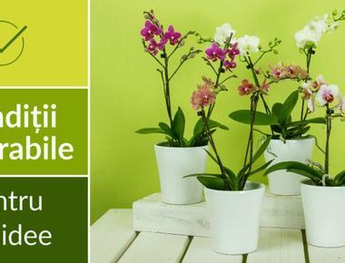 Cum întinerim și Înmulțim orhideea(CORECT)