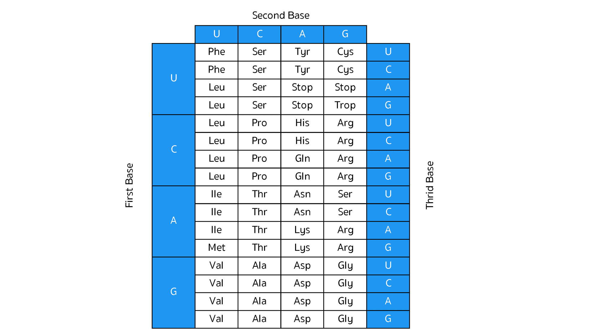 Codon Table