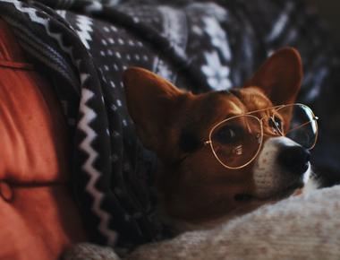 Your Dog Sleeps on Your Pillow? Here's Why