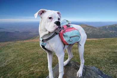 5 Reasons Your Pup Needs a Dog Backpack