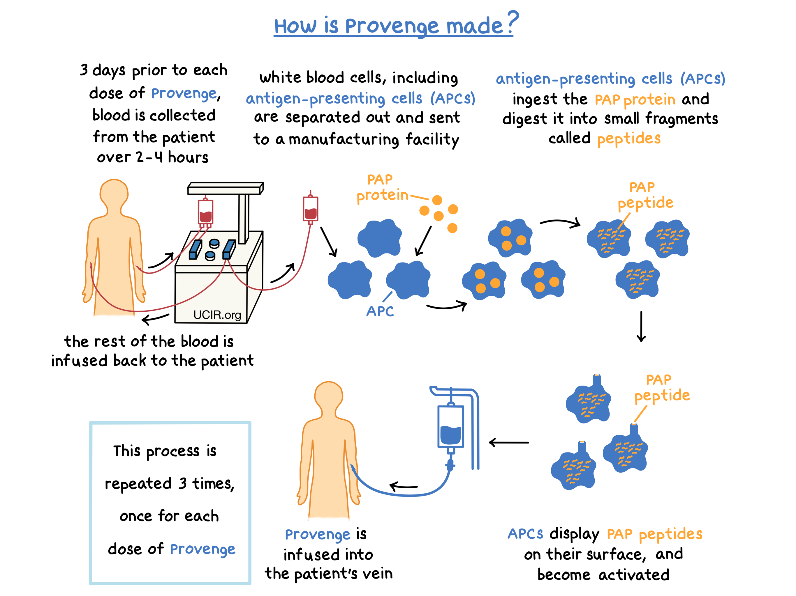 Illustration showing how Provenge is made