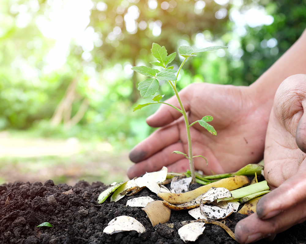 'Natural Fertilisers And How To Use Them'