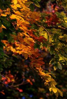 Autumn Colours 1691