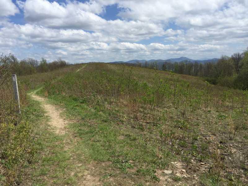 Trail on Snowbird Mountain