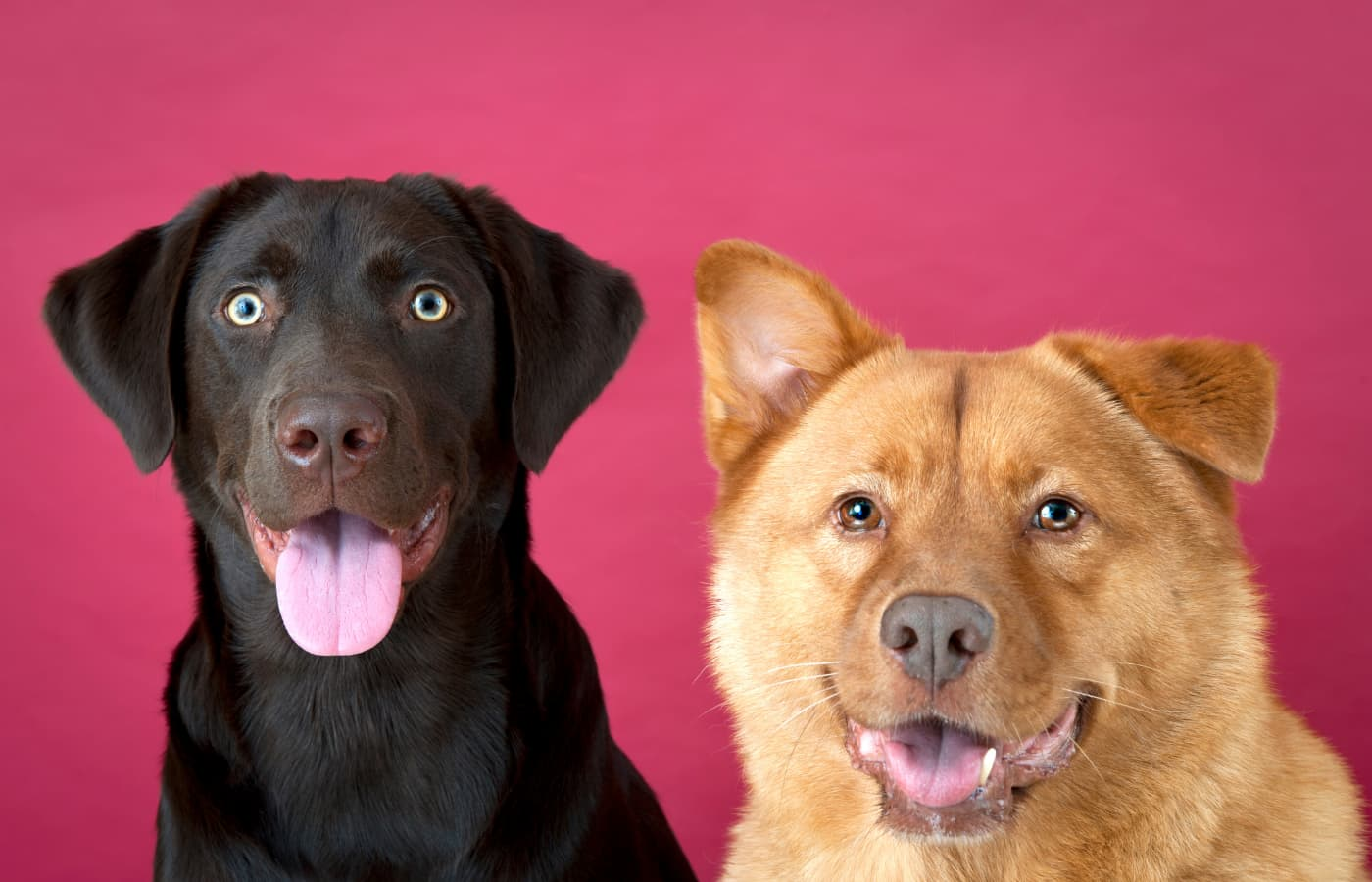 Cute and inspiring dogs