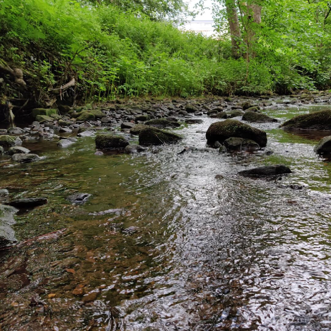 Hawksworth Wood Oil Beck