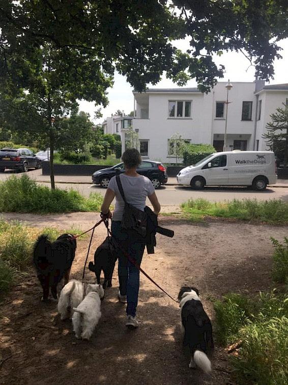 De honden gaan na afloop met de bus terug naar huis.
