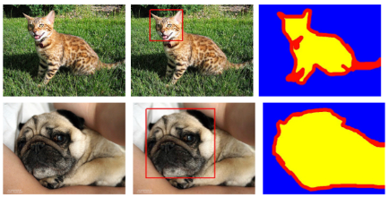 Examples from the Oxford-IIIT pet dataset