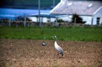 A Crane stands tall