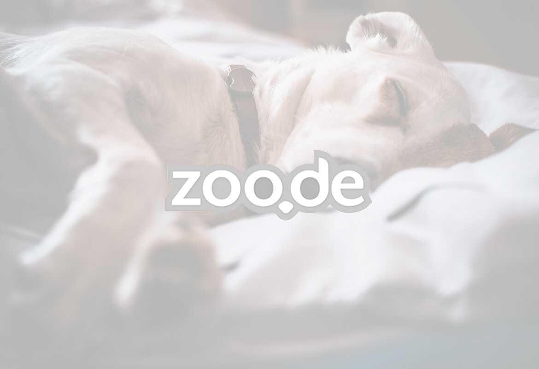 zoo.de Logo Fullscreen