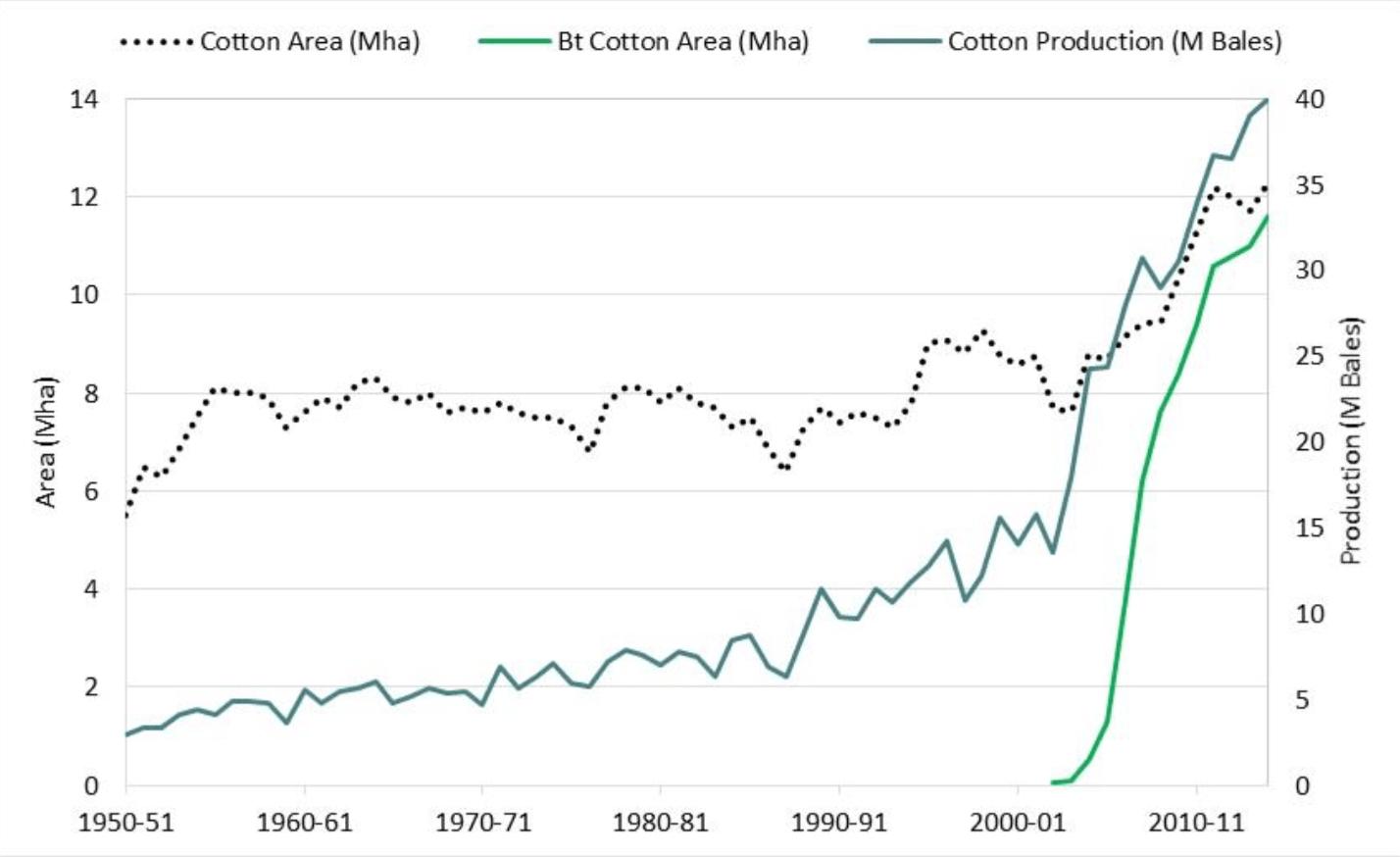 1. ábra: Az indiai gyapottermesztés alakulása az 1950-es évektől napjainkig. Fekete pontvonal: az összes gyapot termőterülete (millió ha), világoszöld vonal: a Bt-gyapot termőterülete (millió ha), és sötétzöld vonal: gyapottermelés (millió bála) (CHOUDHARY, B. – GAUR, K. 2015). Egy gyapotbála súlya 177,8 kg.