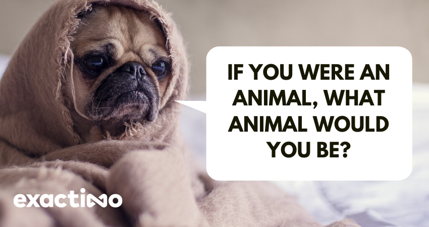 If you were an animal, what animal would you be?