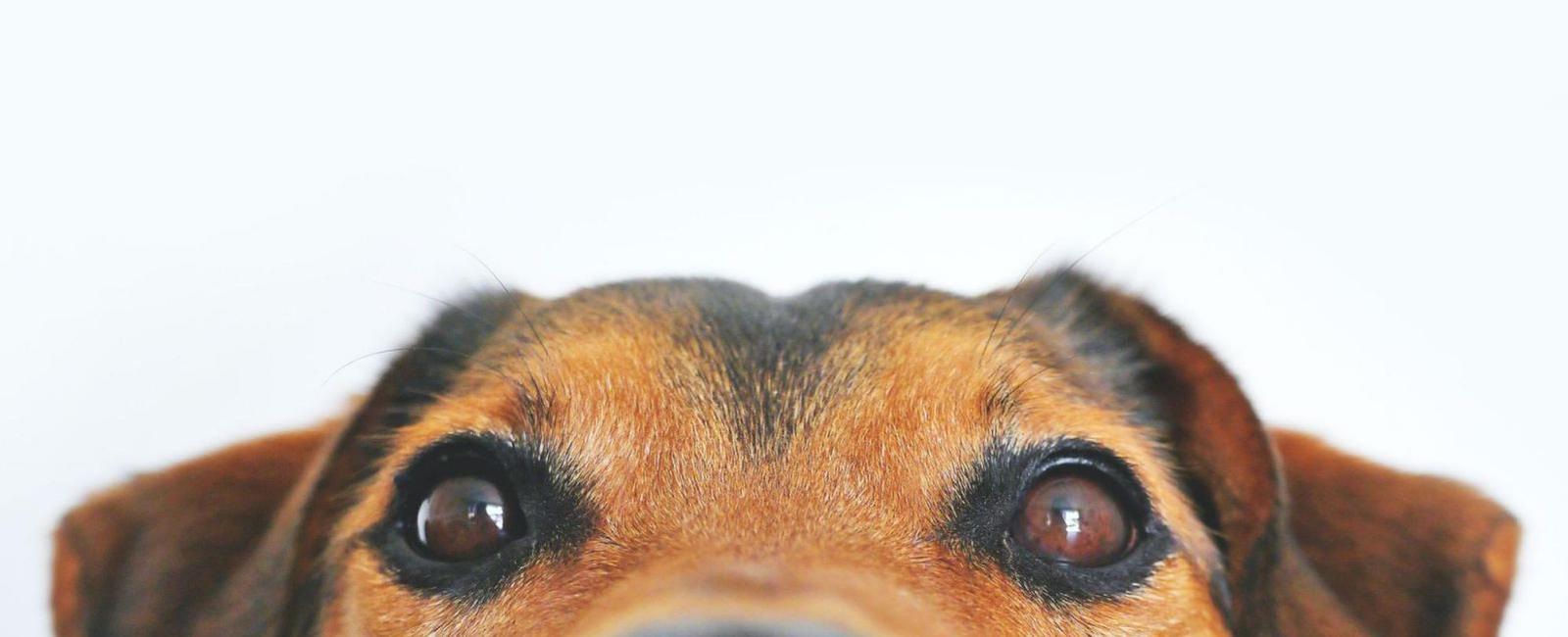 Do Dogs Blink?