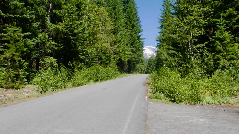 A view of Mt. Adams from the road to Trout Lake