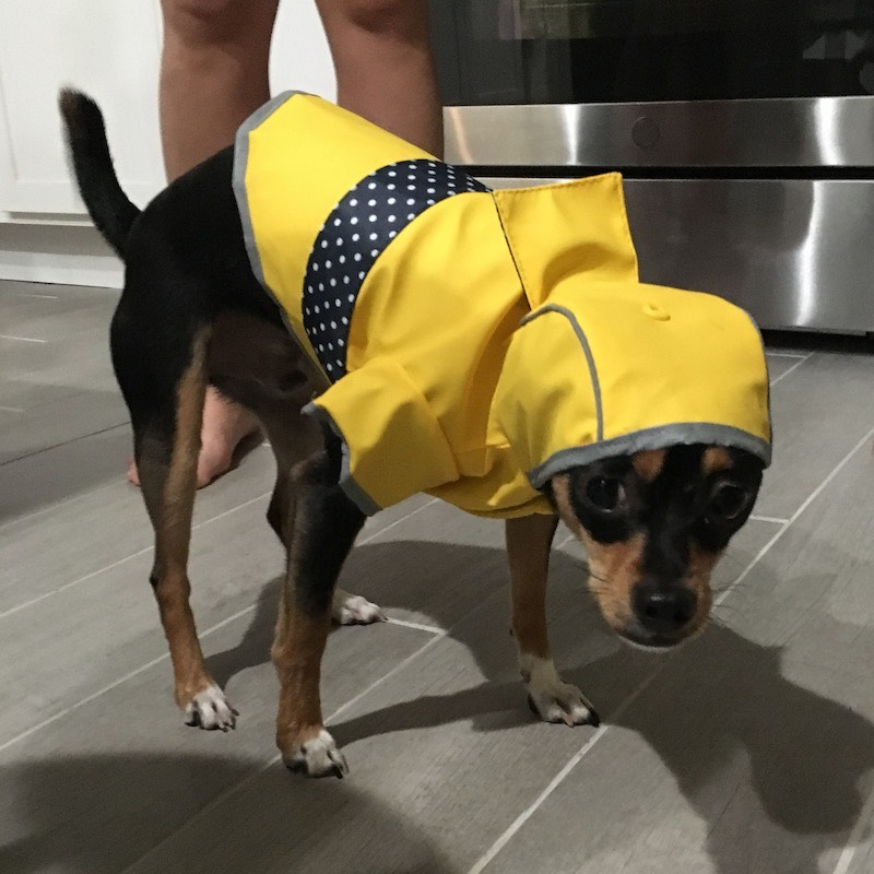 Basil in a raincoat.