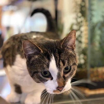 cat-hotel-boarding