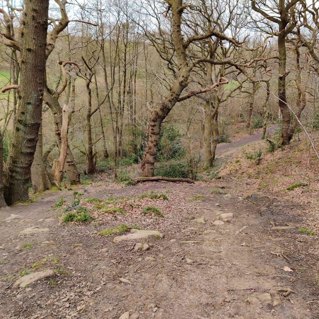Path through Hetchell Woods Leeds