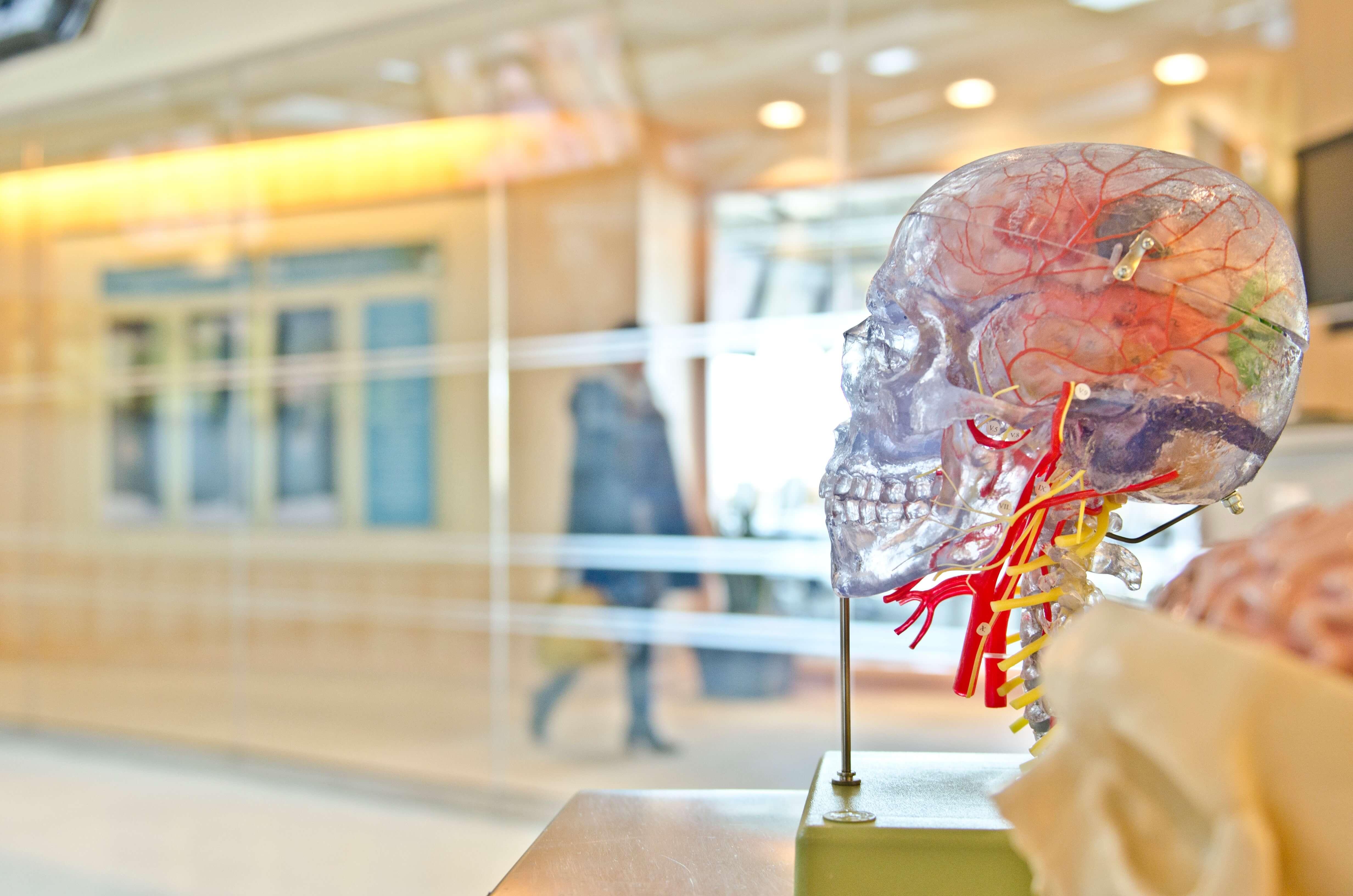 Transparent image of skull