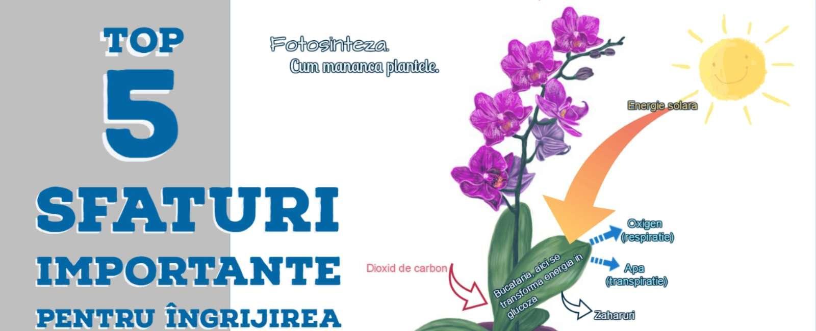 Sfaturi pentru ingrijirea Orhideelor
