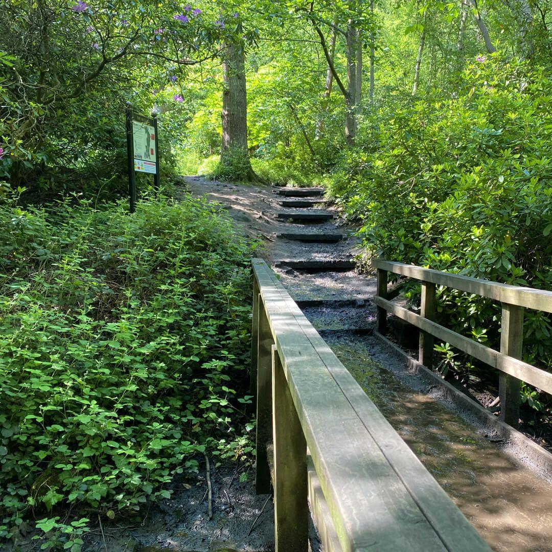 Meanwood Park path over stream