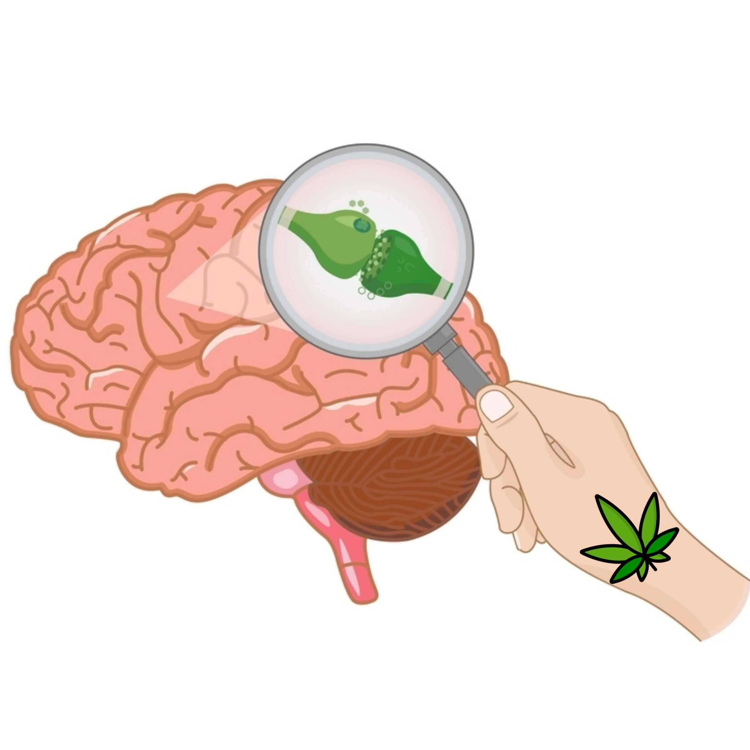 Effects of Cannabis: How It Affects Your Mind & Body